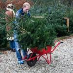 Kerstbomen 16